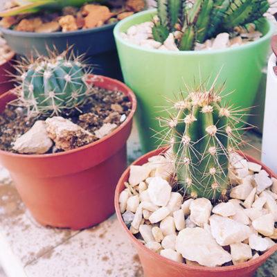 cactus-collection-outdoor-garden