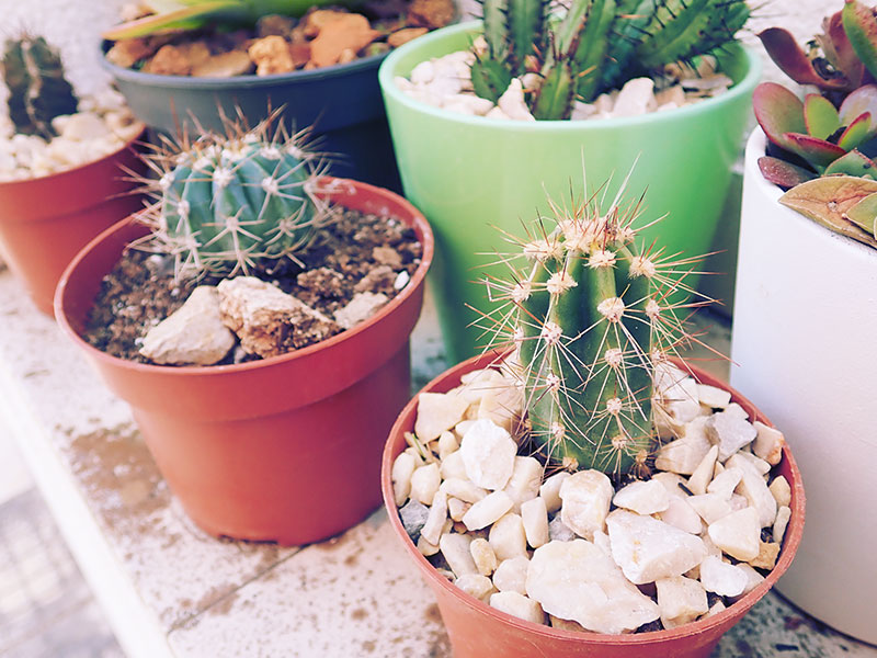"Cutest Cactus Names on the Plot: Funny ""Pet"" Names for Cacti"
