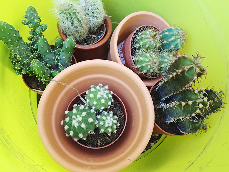 Cactus Puns so Pricklin' Funny, Life Would Succ Without Them