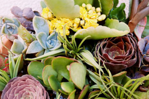 succulent-cuttings-in-outdoor-flower-arrangement-pot