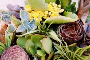 succulent-cuttings-in-outdoor-flower-arrangement-pot