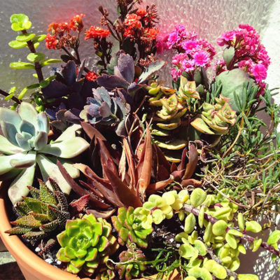 succulents-arranged-in-pot