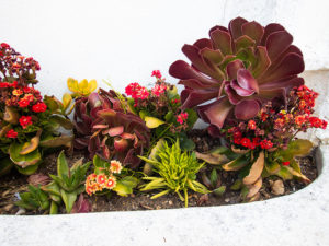 after-3-succulent-flower-bed-arrangement-2-month