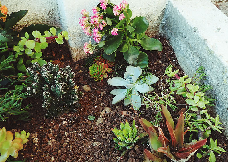 Naming Your Succulent Fetching Pet Names Funny Cute