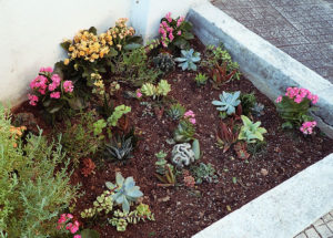 succulent-planter-bed-outdoors-coral-reef-under-the-sea