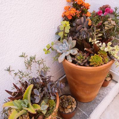 terracotta-clay-succulent-pots-modern-tall