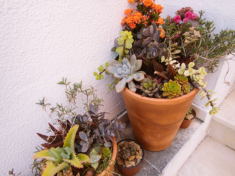Only Want to Use Terracotta Succulent Pots? Still So Many Options…