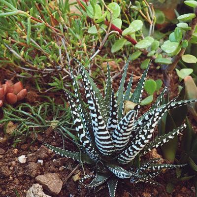 under-the-sea-succulent-arrangement-close-up