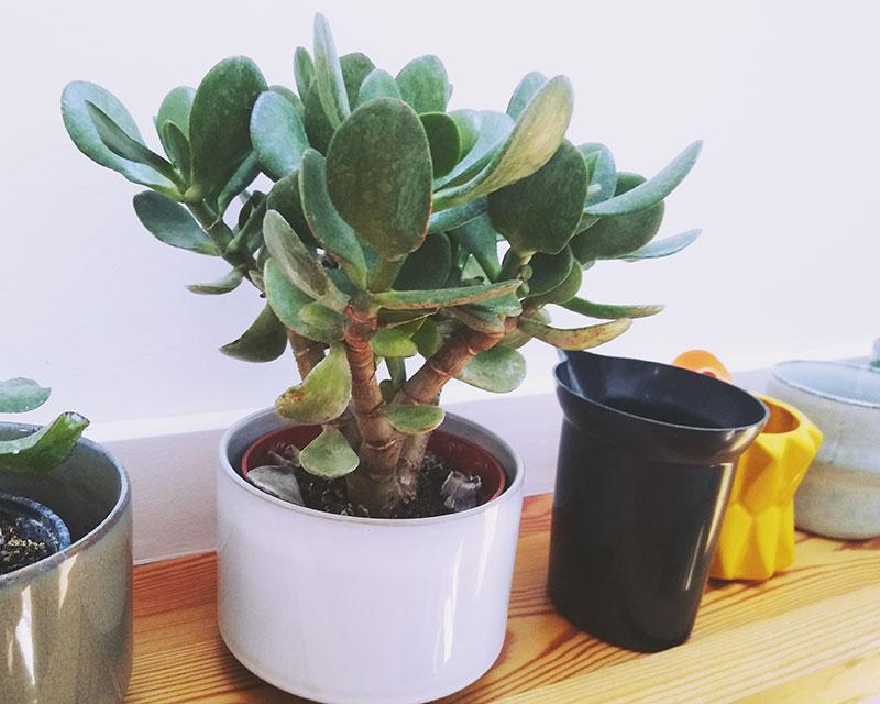 Whale Succulent Planter  Cactus Planter  Indoor Planter  Air Planter  Plant Pot  Home Decor  Apartment Decor  Planter  Moby Dick