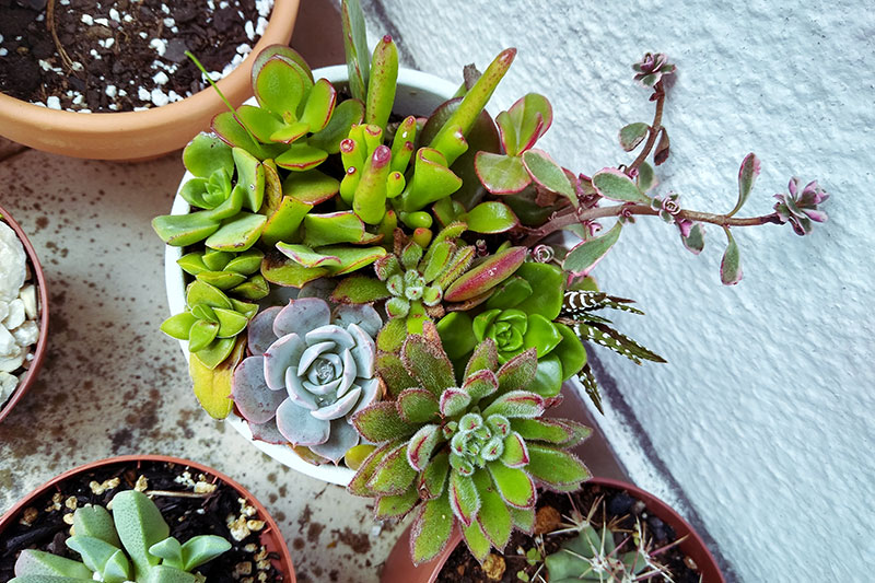 This image has an empty alt attribute; its file name is collecting-smallest-succulents-cuttings-cute-arrangement.jpg
