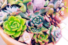 Some of the Smallest Succulent Plants Around; Can You Think of More?
