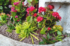 Outdoor Succulent Flower Bed Arrangement Rehab