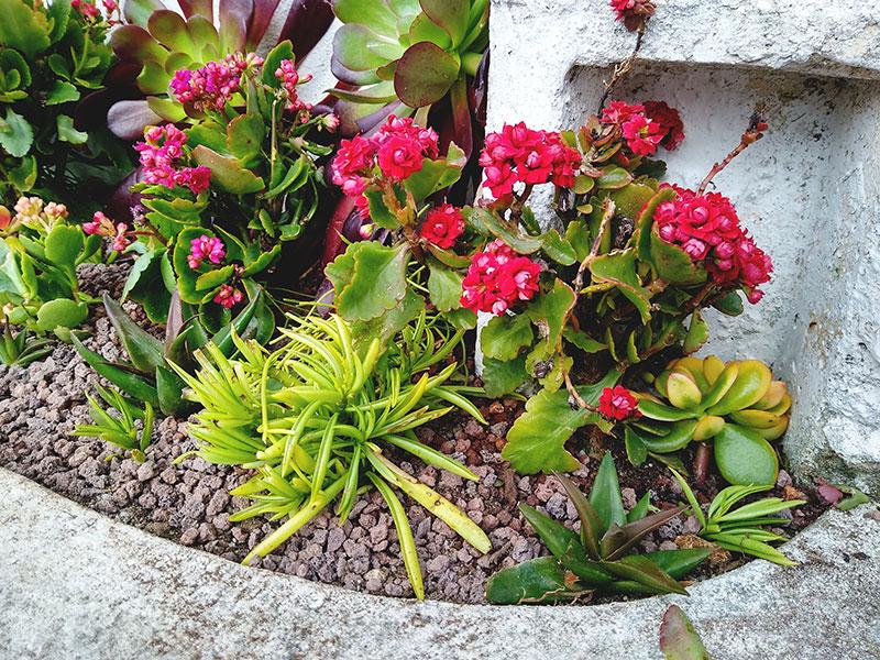 Outdoor Succulent Flower Bed Arrangement Rehab