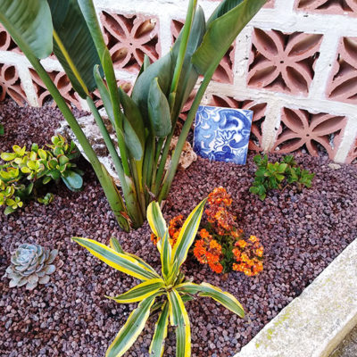 portuguese-tile-outdoor-succulent-arrangement