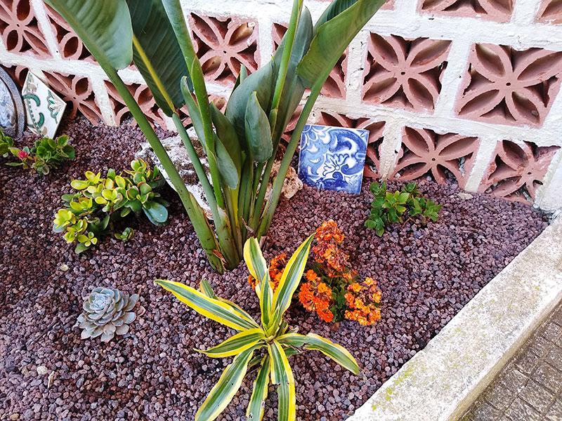 Minimalist Outdoor Succulent Arrangement With Portuguese Tiles