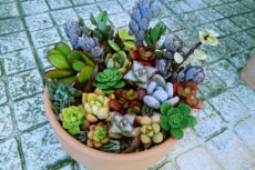 Cute Clay Bowl Planter Succulent Cutting Arrangement