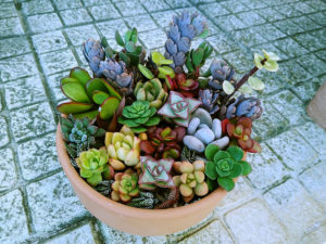 succulent-cutting-arrangement-low-clay-pot