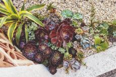 Primarily Purple Outdoor Corner Succulent Mix Arrangement